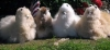 Cushing Alpaca LG