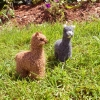 100% Baby Alpaca Figurine - Huacaya